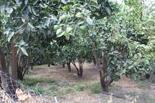 прогулка около деревни после обеда. Апельсиновые деревья. тишина. народу мало