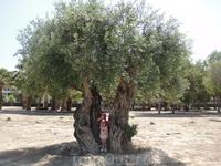 дерево около пляжа
