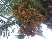 Странная пальма=)
