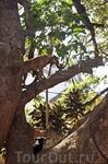Как часто Вы видели что собаки лазают по деревьям?)