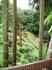 Дивные пейзажи сада королевы-матери Дой Тунг, сочетание цветов и тропического леса.