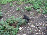 Ботанический сад. Не поверите это КЫса, так кричали местные дети увидев бедного кота. Ну говорить что все сразу стали его тискать...