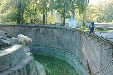 Долгожитель Калиниградского зоопарка - белый медведь