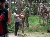 в экскурсию так же входит поездка на плантацию обезьян