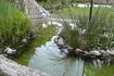 Искусственный пруд с черепахами.