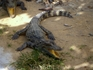 "крокодильчики на ""змеином источнике"""