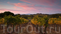 В пределах города есть несколько небольших производителей вин и дегустационных залов, выполненных в стиле индустриальный шик. Например, «Bluxome Street» ...