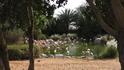 Зоопарк в Аль Айне.