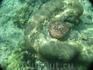 Морская звезда на кораллах, о. Пхи-Пхи-Лэйт.