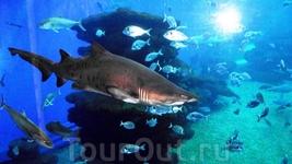 Океанариум - аквариум - Shark