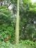 деревце с шипами
