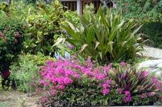 растения Сайпана