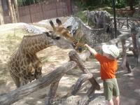 в зоопарке Као Кео можно кормить жирафов, носорогов, бегемотов, слонов, оленей