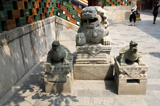 Священные черепашки и лев