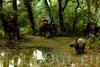 Фотография Национальный парк Читван