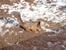 Белочка, замеченная в Петергофе