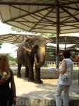 до слонов добрались