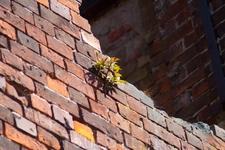 Дыра от снаряда. Из стены пробивается жизнь.