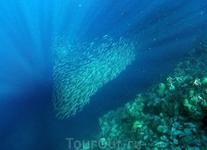 Стайка сардин над рифом у Панагасами-бич