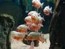 Пираньи в океанариуме - настоящие хищники!