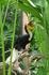Бали/ парк птиц / тукан