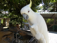 Paradise Park Farm на Самуи. Эти попугаи не только едят бананы, но и, оказывается, любят!, чтобы их гладили!