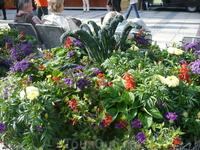так со вкусом и по цветовой гамме составлены обычные растения,даже капуста распахнула свои*уши*.