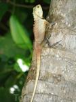фауна Мальдив
