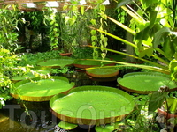 В ней растут тропические и субтропические растения,а также виды из прерий и пустынь.