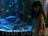 Океанариум Siam Ocean World - самый большой в ЮВА