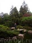 Ботанический сад. Это отделение флоры Японии.