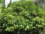 Лимонные деревья, прям во дворе нашего отеля. напротив бассейн, и джакузи