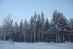 Лапландская тайга.