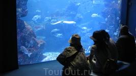 Перед аквариумом-несколько рядов скамеечек, чтобы удобней было любоваться