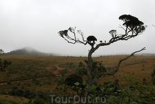 плато Хортон