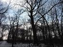 Мы поехали погулять в небольшом лесном парке возле Бендер, который называется Меренешты.