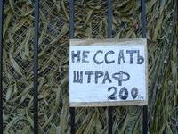 В пяти метрах от моря))