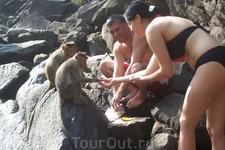 На водопаде Дудхсагар мы кормили обезьянок, очень милые и умные животные. Одна обезьянка стянула у нас пакет с бананами и орехами.