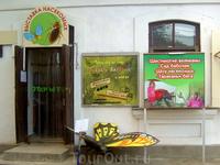Выставка насекомых :)
