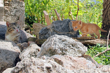 а эта кошачье семейное фото :)