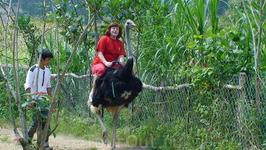 катание на страусах в далате