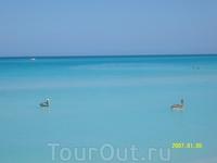 Пеликаны в океане...
