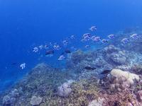 Типичный подводный вид Бароса