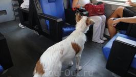 Собачка в вагоне поезда =)