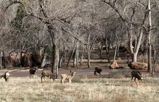 Стадо оленей в Зайоне увидели! Так неожиданно!