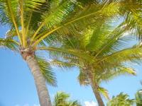 лежа под пальмой...и пусть весь мир подождёт...