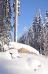 Снег, сосны и гранит.