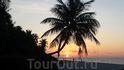 восход солнца сквозь пальмы