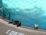 Голуби в  бассейне(наверно в мяч играли...:))