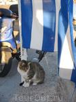 Во второй день пришли в порт, чтоб поплыть на Сими. Первое, что бросилось в глаза - количество кошек. Эта красотка позировала минут десять.